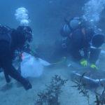 #19応用藻類学2