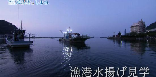 漁港水揚げ見学